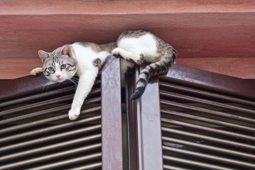 扉の上に登る猫