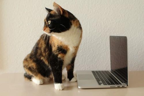 パソコンの前に座る猫