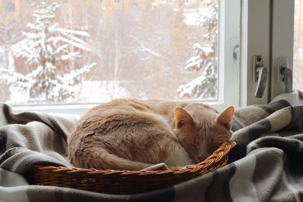 窓際で籠の中で寝る子猫