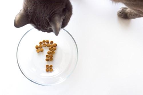フードで書かれたクエスションマークを見る猫