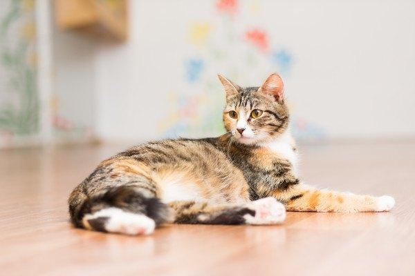 床に座っている猫
