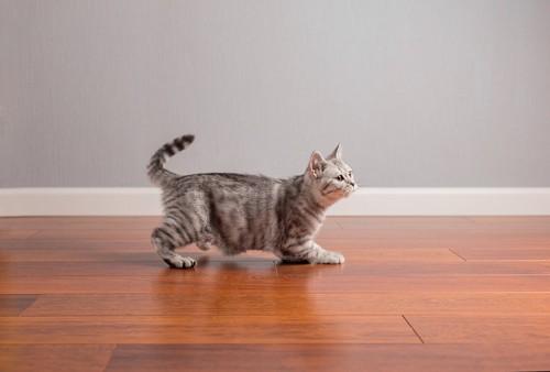 走ろうとする猫