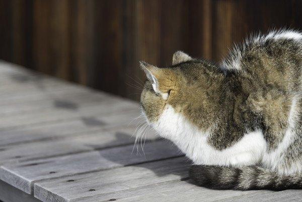 そっぽを向く縁側の猫