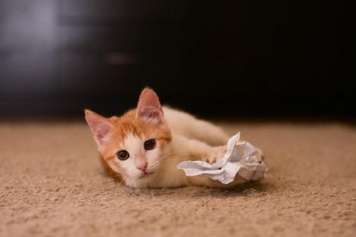 紙をつかむ猫