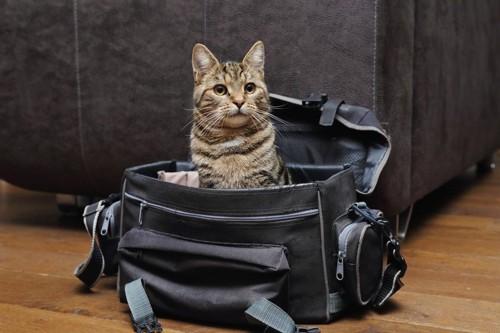 鞄から顔を出す猫