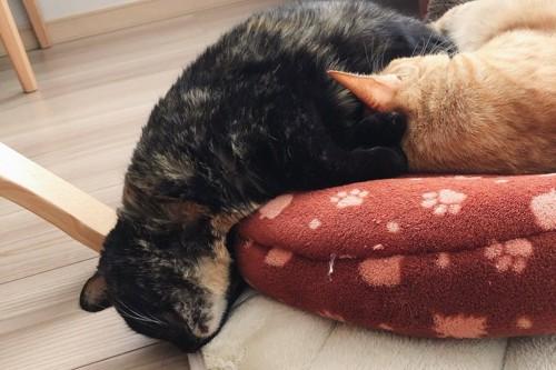 寝相悪いサビ猫