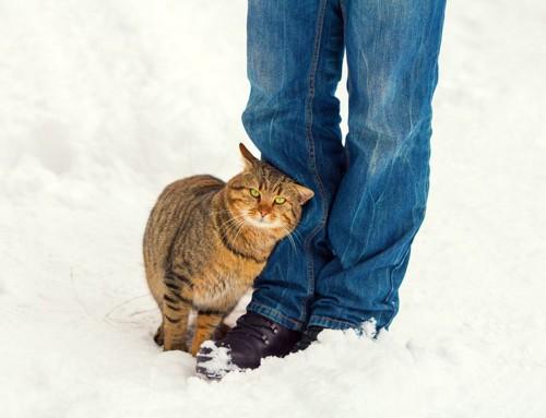 空腹を訴える猫