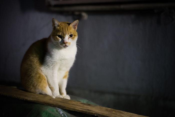 夜、たたずむ猫