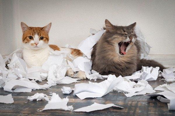 紙に囲まれている二匹の猫