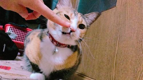 #指をスリスリする猫#