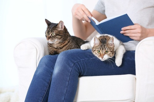 飼い主の膝に乗る二匹の猫