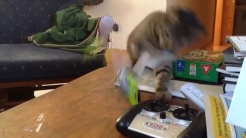 強力猫パンチをする猫