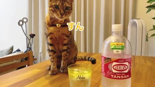 コップとペットボトルとおすわりする猫
