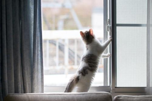 立って外を見る猫