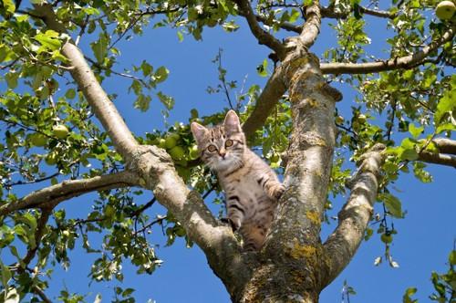 木の上から下を見る子猫