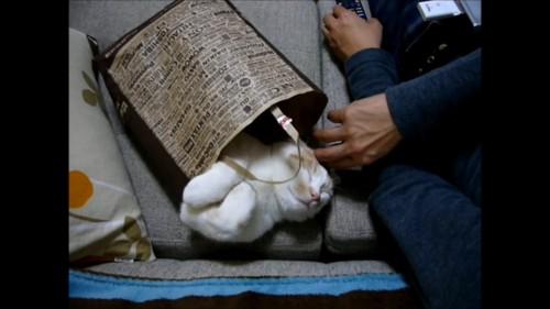 袋の中で寝る猫
