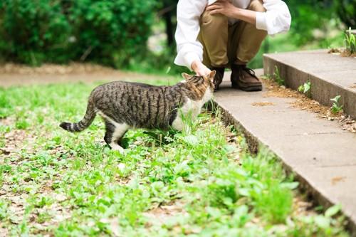 野良猫に触る人