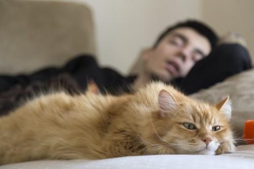 眠っている男性の隣で休む猫