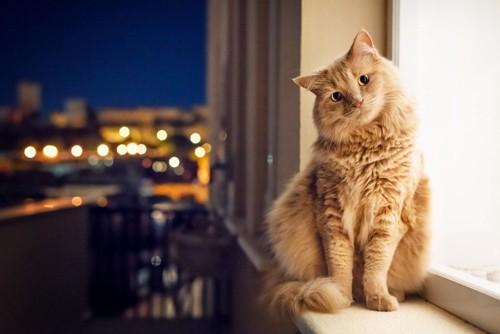 ナイトシーンに窓際にいる猫