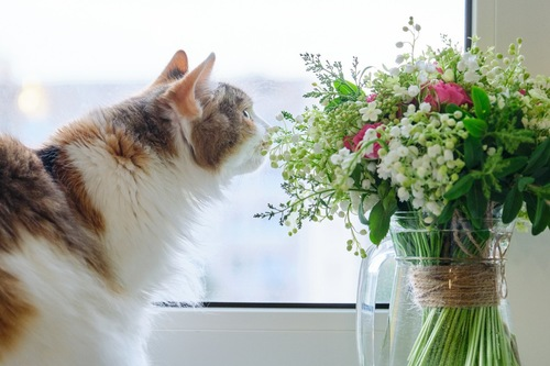 匂いをかぐ猫