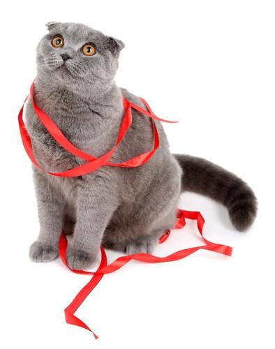 赤いリボンを身体に巻きつけた猫