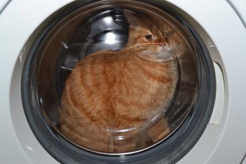 洗濯機の中に入ってふたを閉じられてしまった猫