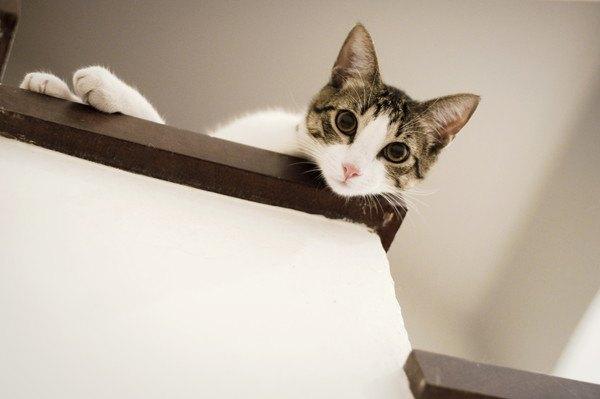 階段からこちらを見る猫