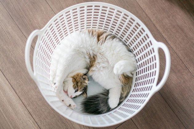洗濯カゴの中にいる猫の写真