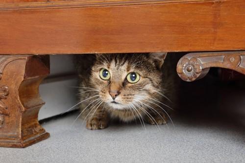 テーブルの下に隠れる猫