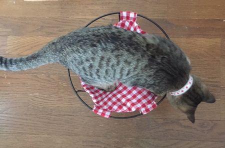 猫がハンモックに乗っている