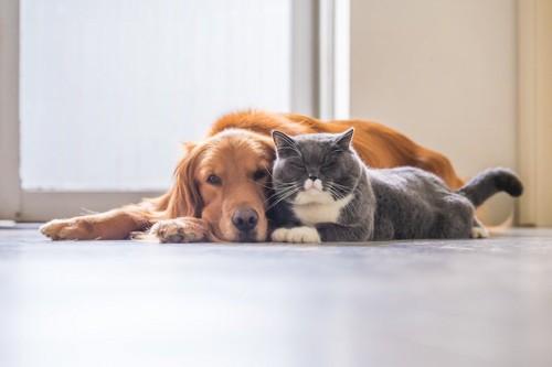 犬に寄り添って一緒に眠る猫