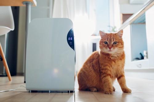 扇風機の横に居る猫