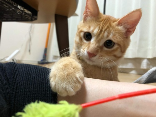 猫じゃらしとキナコ