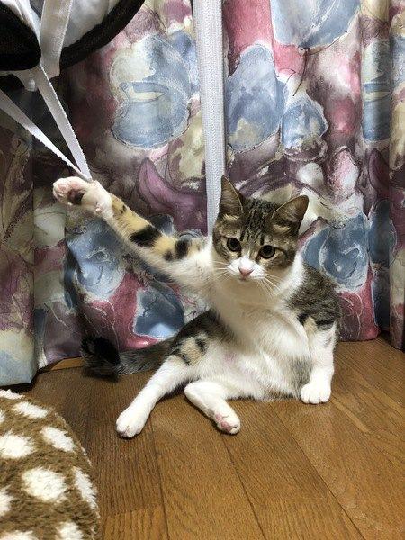 ゴムに爪が引っ掛かった猫