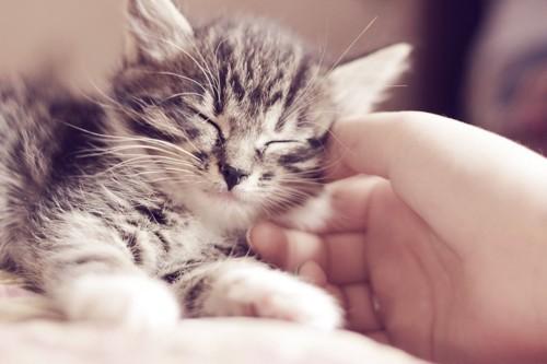 猫を撫でる手