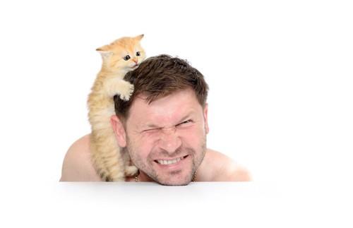 男性の顔によじ登る子猫
