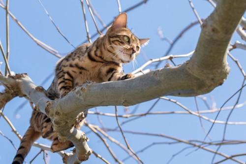 木の上に登っている猫