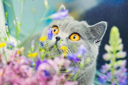 綺麗な花の中にいる猫