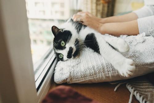 構われる猫