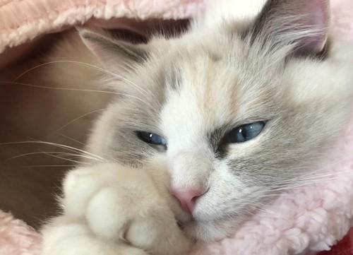 うっとりしている猫
