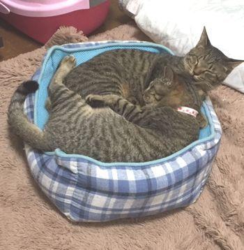 2匹でベッドの上で寝ている