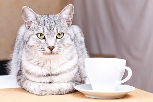 コーヒーカップの隣でくつろぐ猫