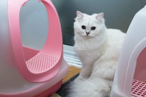 2つのドーム型トイレの間にいる猫