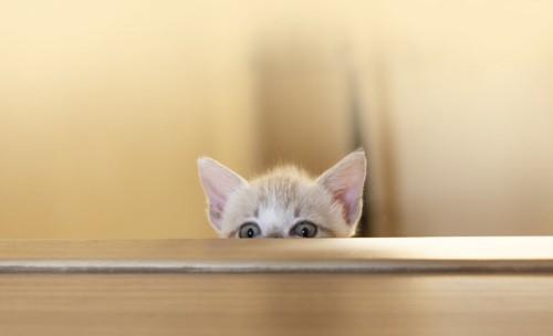 テーブルの下から覗く子猫