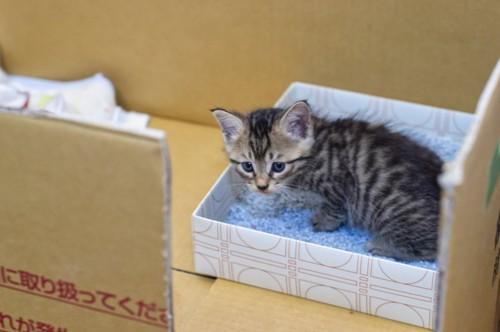段ボール箱の中の猫トイレ