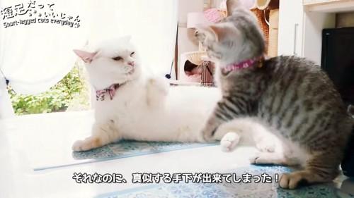 ケンカをする2匹の猫