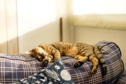 ベットでお昼寝する猫