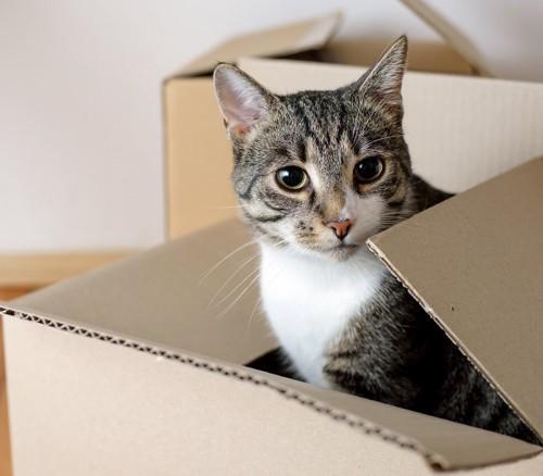 引っ越しの荷物にまぎれている猫