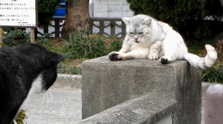 灰色猫と黒白猫