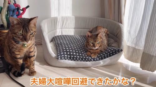 座る猫と猫ベッドにいる猫